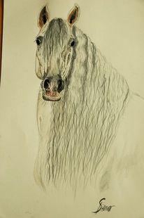 Schimmel, Hengst, Aquarellmalerei, Pferde