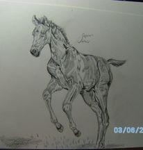 Pferde, Bleistiftzeichnung, Fohlen, Galopp