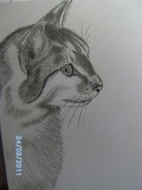 Katze, Zeichnung, Grau, Bleistiftzeichnung