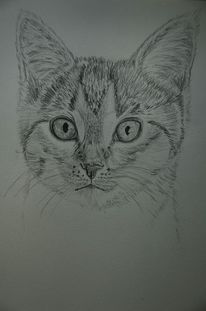 Katze, Bleistiftzeichnung, Zeichnung, Zeichnungen