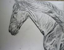 Pferde, Bleistiftzeichnung, Rappe, Friese