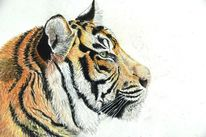 Pastellkreiden, Katze, Pastellmalerei, Tiger