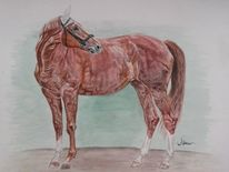 Aquarell pferd, Aquarellmalerei, Pferde, Aquarell