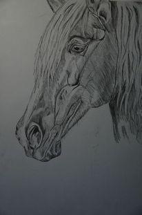 Grau, Bleistiftzeichnung, Pferde, Zeichnung
