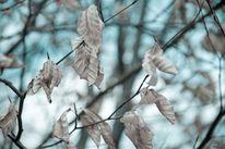 Fotografie, Blätter, Baum, Stillleben