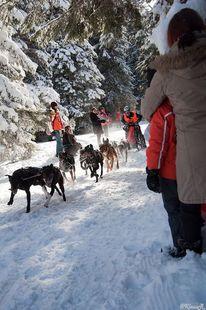 Schlitten, Aktion, Winter, Schnee