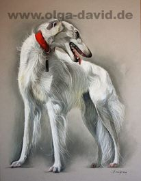 Sighthounds, Barsoi, Borzoi, Wolfhound