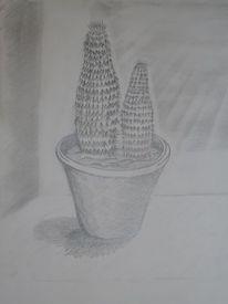 Blumen, Zeichnungen, Pflanzen, Kaktus
