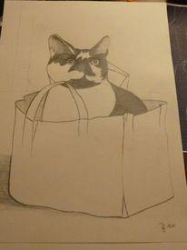 Kater, Zeichnungen, Tiere