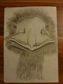 Lustigstrauss, Zeichnungen, Scheibe