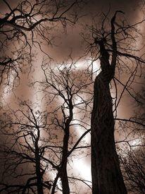 Landschaft, Natur, Krone, Baum
