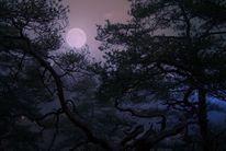 Landschaft, Äste, Blätter, Mond