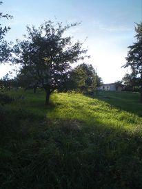 Natur, Sonnenschein, Fotografie, Lichtblick