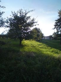 Natur, Sonne, Fotografie, Lichtblick