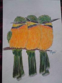 Vogel, Leben, Farben, Buntstiftzeichnung
