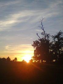 Dunkel, Vogel, Sonnenuntergang, Natur