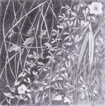 Zeichnung, Bleistiftzeichnung, Pflanzen, Natur
