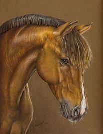 Pferde, Pferdeportrait, Malerei, Tiere