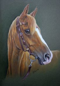 Pferdeportrait, Araber, Pferde, Malerei