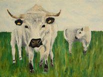 Kuh, Rind, Englisches parkrind, England