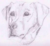 Bleistiftzeichnung, Tiere, Hund, Hundezeichnung