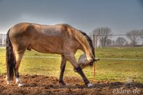 Pony, Pferde, Fotografie, Tiere