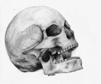 Zeichnungen, Portrait, Schädel