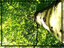 Wald, Frühling, Buch, Holz