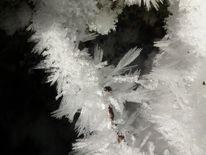 Kälte, Frost, Eisblumen, Eis
