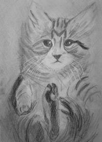 Katze, Tiere, Bleistiftzeichnung, Mietze