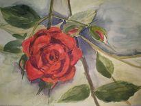 Rose, Aquarellmalerei, Rot, Blumen