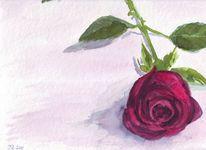 Natur, Aquarellmalerei, Dorn, Rose