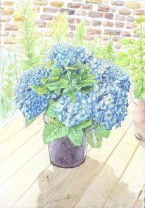 Blau, Topfpflanze, Überdüngt, Prachtvoll