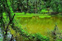 Outsider art, Teich, Mindanao, Wald