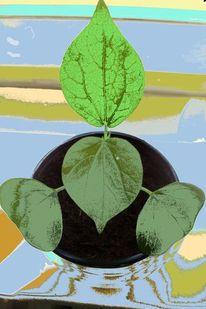 Pflanzen, Baumwolle, Digitale kunst, Digital