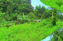 Mindanao, Outsider art, Fotografie, Konzept