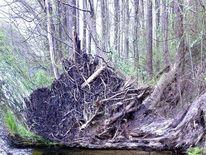 Sumpf, Outsider art, Erle, Erlenbruchwald