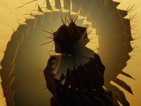 Bischofsmütze, Kaktus, Fotografie, Surreal