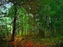 Wald, Erle, Outsider art, Schwarzerlen