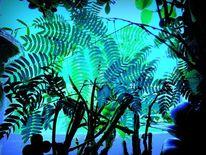 Blätter, Outsider art, Mimose, Fotografie