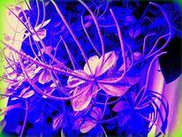 Outsider art, Peperomia verticillata hybrid, Zwergpfeffer, Fotografie