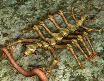 Skorpion, Ergreifen, Augen, Regenwürmer