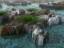 Meer, Korallen, Transparenz, Island