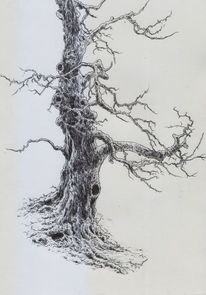 Alte meister, Mystik, Baum, Natur