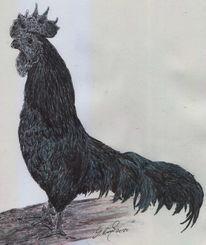 Vogel ziergeflügel, Hahn, Huhn, Feder