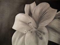 Zeichnung, Schatten, Blüte, Blumen