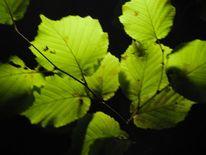Fotografie, Blätter, Nacht