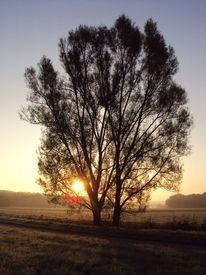 Nebel, Baum, Sonnenaufgang, Sonne