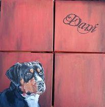 Rostton, Hundekopf, Hund, Portrait