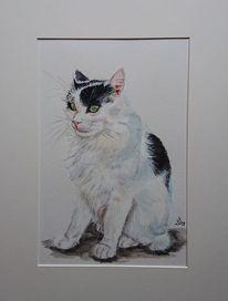 Kater, Katze, Portrait, Mietze